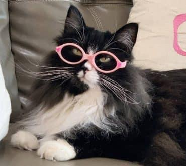 Γάτα φορά γυαλιά για να βοηθήσει τα παιδιά να νιώσουν πιο άνετα με αυτά