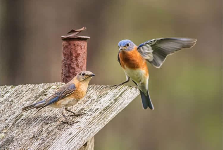 Έρευνα: Το κελάηδημα και η παρατήρηση των πουλιών μας κάνουν πιο ευτυχισμένους