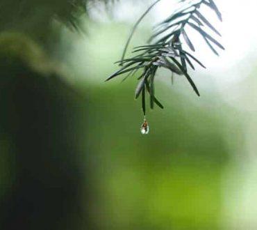 Η Γη θα «αφυδατωθεί πριν πεινάσει» - Ο κρίσιμος ρόλος του νερού στην επιβίωση της ανθρωπότητας