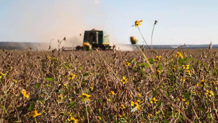 Lendy Pech: Η μελισσοκόμος που εμπόδισε τις καλλιέργειες γενετικά τροποποιημένης σόγιας της Monsanto
