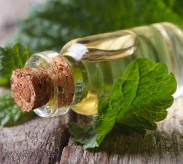 Μελισσόχορτο: 5 αποδεδειγμένα οφέλη για την υγεία μας