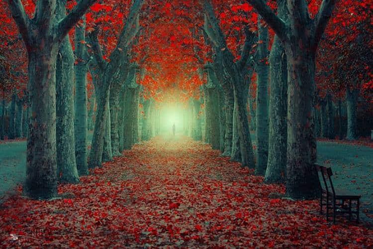 Τα μονοπάτια της ψυχής στην καρδιά της φύσης