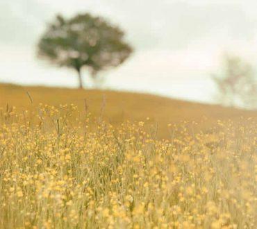 Πώς η σιωπή αλλάζει πραγματικά την βιολογία μας. Οι επιστήμονες εξηγούν