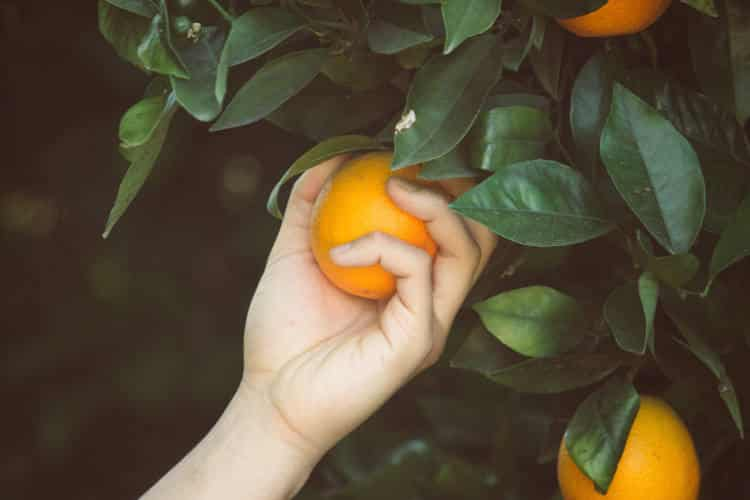 Ισπανία: Η Σεβίλλη μετατρέπει τα πορτοκάλια της πόλης σε «πράσινη» ενέργεια