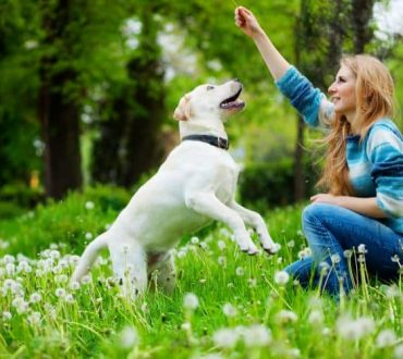 Πώς οι σκύλοι επεξεργάζονται τις λέξεις; Η επιστήμη απαντά