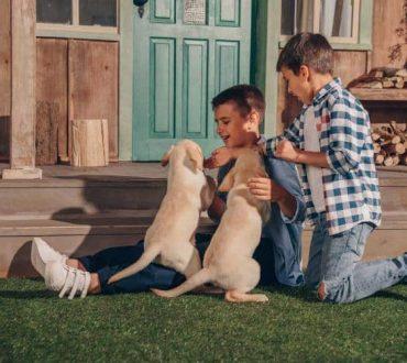 Οι σκύλοι μπορούν να μυρίσουν την επιληπτική κρίση πριν αυτή συμβεί