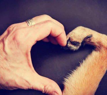 Σκύλος: Ο καλύτερός μας φίλος σε όλες τις συνθήκες