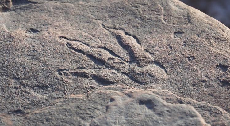Ουαλία: 4χρονο κορίτσι βρήκε αποτύπωμα δεινοσαύρου σε παραλία ηλικίας 215 εκατομμυρίων ετών