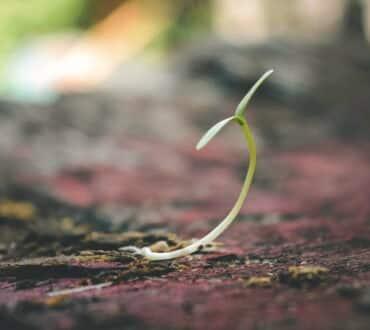 Η ελπίδα πάντα θα ζει στις ψυχές μας και θα αποτελεί το νόημα της ζωής!