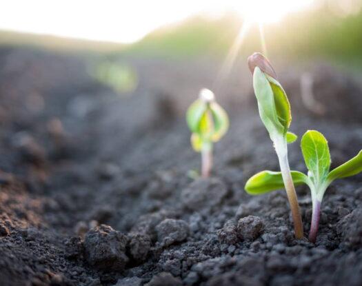 Έρευνες: Η επόμενη γενιά αντιβιοτικών μπορεί να προέλθει από το χώμα