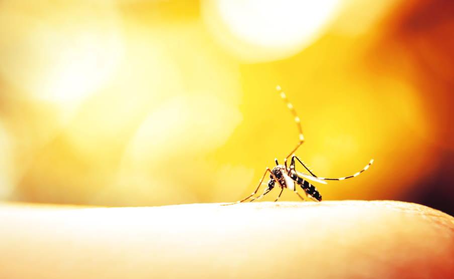 Οι 10 καλύτεροι τρόποι να κρατήσετε τα κουνούπια μακριά από εσάς, το σπίτι και τον κήπο σας