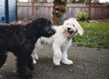 Νέα μελέτη επιβεβαιώνει αυτό που... θέλαμε βαθιά μέσα μας να είναι αλήθεια. Τα ζώα γελούν!