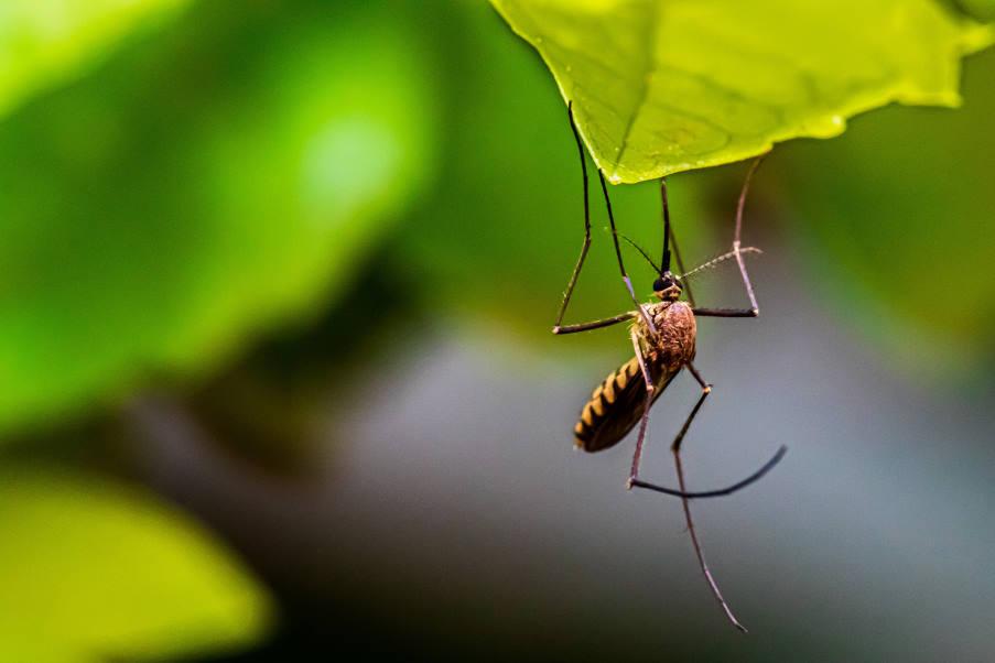 Νέο πειραματικό εμβόλιο «υπόσχεται» 77% αποτελεσματική προστασία κατά της θανατηφόρας ελονοσίας