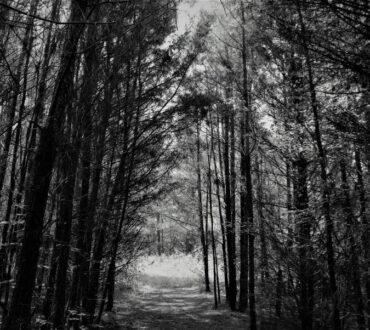 «Όταν σας καλεί ο έρωτας, ακολουθήστε τον. Ακόμα κι αν ο δρόμος είναι δύσβατος και κακοτράχαλος» - Χαλίλ Γκιμπράν