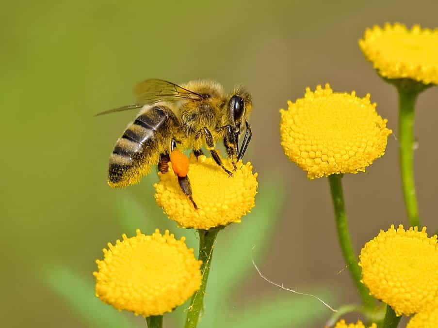 Τσίμπημα από μέλισσα: Πώς μπορούμε να το αντιμετωπίσουμε