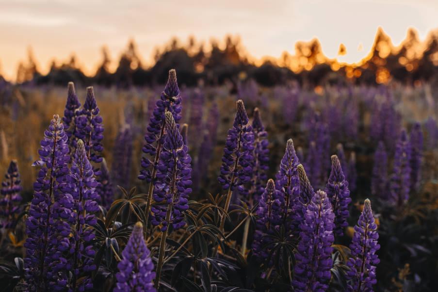 Επιστήμονες ανακάλυψαν πρόσφατα ότι τα φυτά μπορούν να αντιληφθούν την ώρα