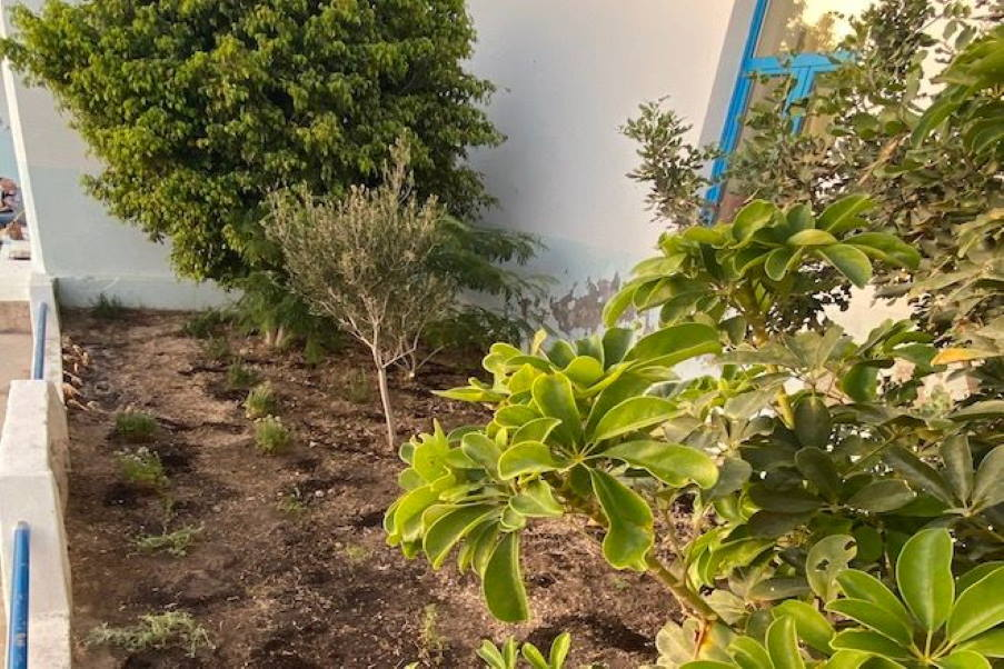 Κίμωλος: Το δημοτικό σχολείο του νησιού απέκτησε έναν καταπράσινο βοτανικό κήπο