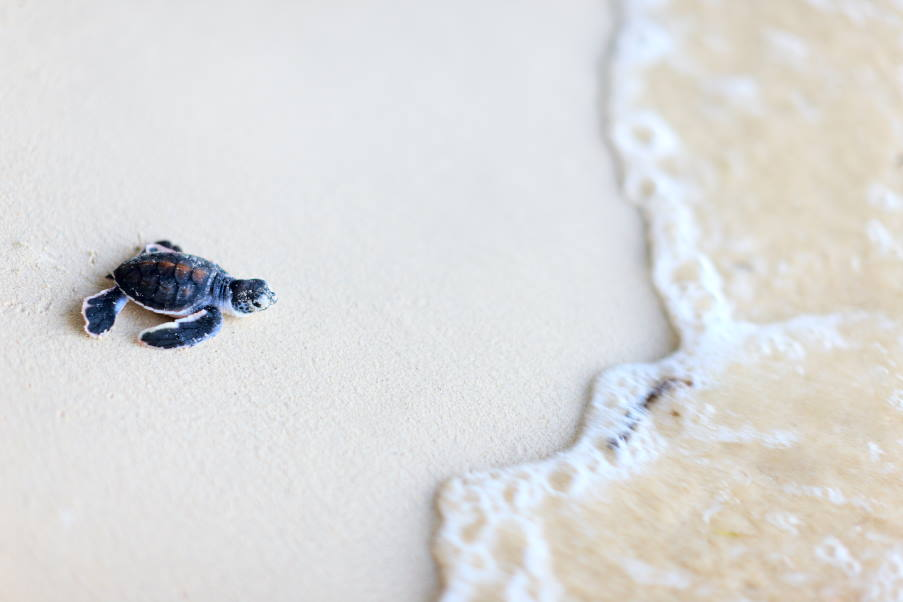 Tartalife: Ιταλική πρωτοβουλία συμβάλλει στην προστασία των θαλάσσιων χελωνών από αλιευτικά δίχτυα