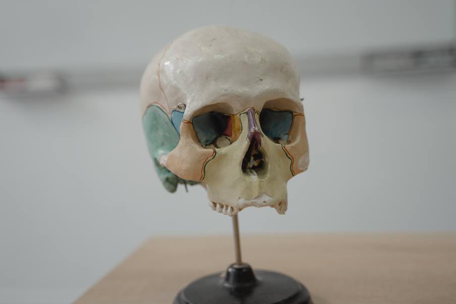 Το αρχαιότερο στέλεχος του «Μαύρου Θανάτου» εντοπίστηκε σε ανθρώπινα οστά ηλικίας 5000 ετών