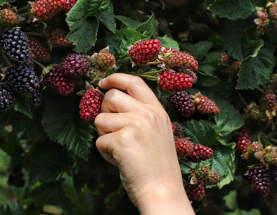 8 φρούτα που έχουν χαμηλή περιεκτικότητα σε ζάχαρη (ιδανικά για διατροφή με λίγους υδατάνθρακες)