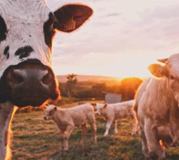 20 κτηνοτροφικές επιχειρήσεις εκπέμπουν περισσότερα αέρια του θερμοκηπίου απ' ό,τι η Γερμανία, η Βρετανία ή η Γαλλία