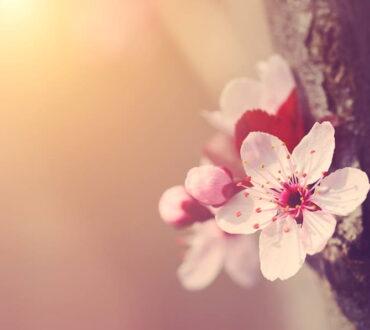 """Τάο τε τσινγκ: """"Όταν οι άνθρωποι βρίσκουν ένα πράγμα όμορφο, ένα άλλο γίνεται άσχημο"""""""