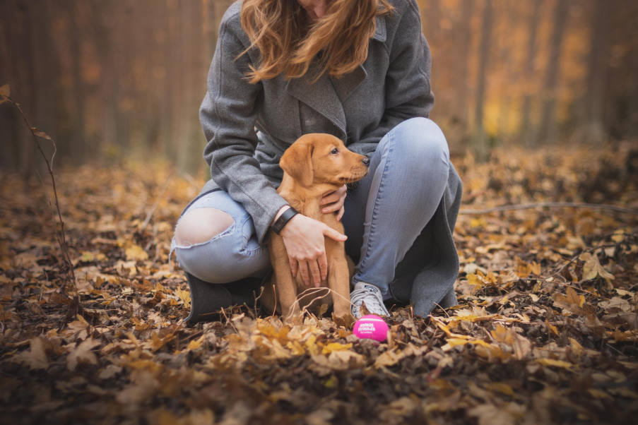 Τα σκυλιά αντιλαμβάνονται χημικές ενδείξεις από τους ανθρώπους που τους μεταδίδουν ενθουσιασμό, φόβο ή ανησυχία