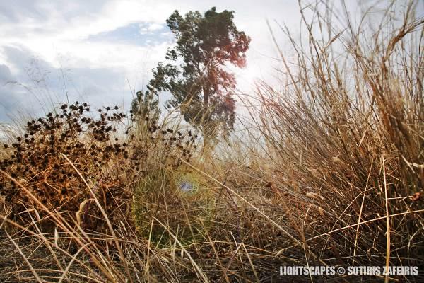 LightScapes5
