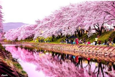 Ανθισμένες κερασιές αντανακλούν στο ποτάμι