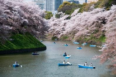 Ποτάμι με ανθισμένες κερασιές