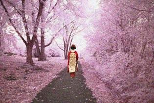 γυναίκα περπατάει σε τοπίο με ανθισμένες κερασιές