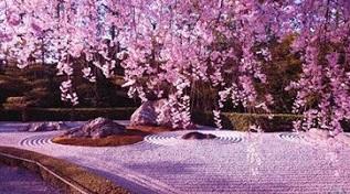 όμορφο μέρος με ανθισμένες κερασιές