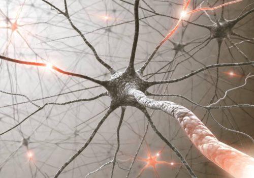 Ο ανθρώπινος εγκέφαλος ανανεώνει τα κύτταρά του και μετά τα 80 χρόνια ζωής