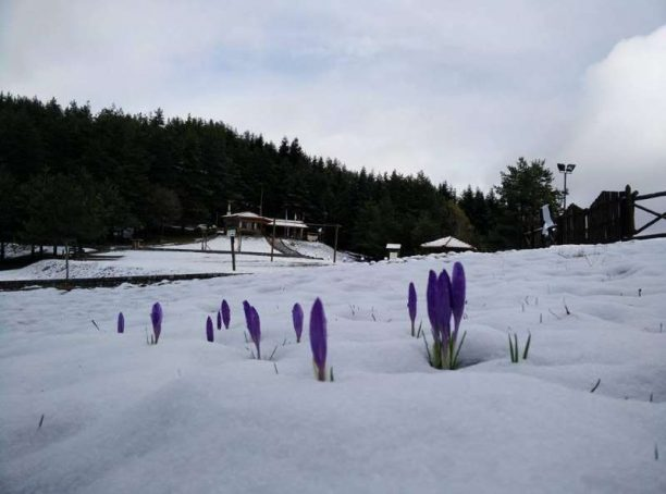 Τα μοβ λουλούδια που περιγράφει ο Μάριος Γιαννάκου στο άρθρο Γεννημένος να αντέχεις