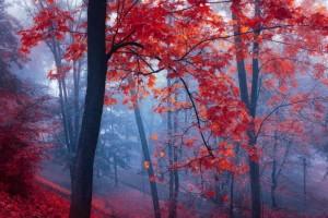 δέντρο τοπίο