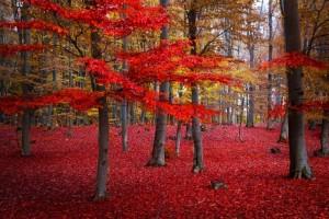 κόκκινα δέντρα τοπίο